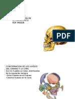Expo Anatomia de Craneo