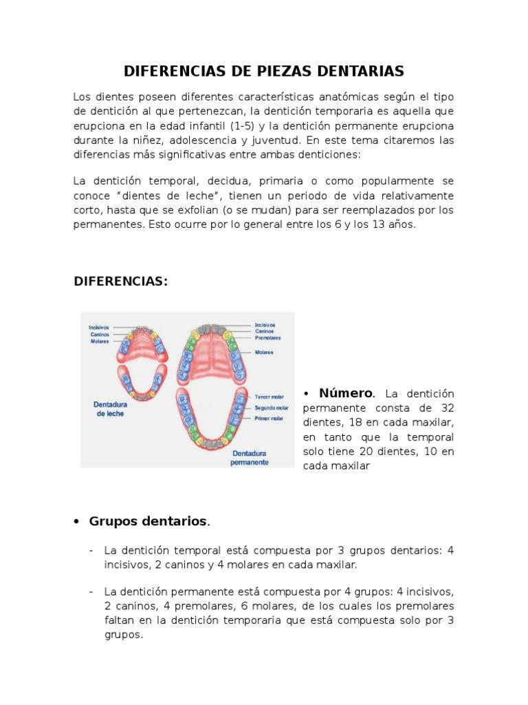 Asombroso Tercero Anatomía Molar Maxilar Colección - Imágenes de ...