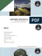 Contenido Examen I Anatomía Patológica, Transcripción - Apuntes