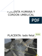 Placenta Humana y Cordon Umbilical