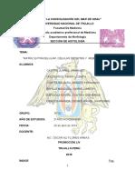 informe-4-tejido-conjuntivo.docx