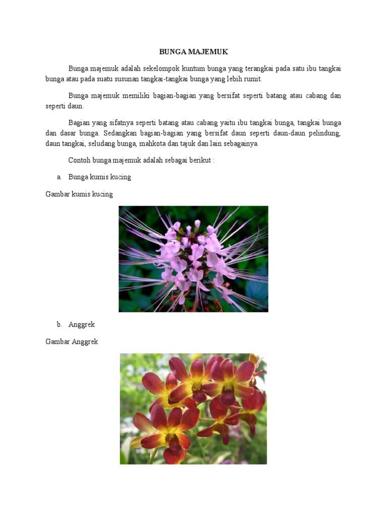Tugas Biologi Bunga Dan Buah Docx