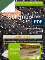 Microbiologia de Suelos - Colembolos