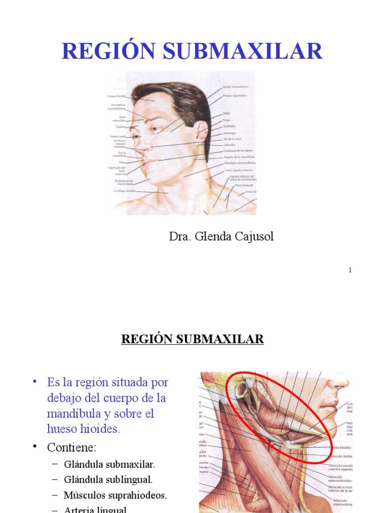 Perfecto Parótida Ppt Anatomía De La Glándula Festooning - Imágenes ...