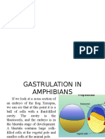 Gastrulation in Amphibians Ppt