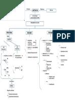 Mapa Conceptual de La ACETILCOLINA