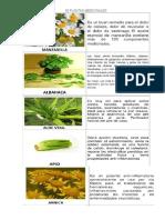 30 Plantas Medicinales Dania