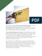Capacitancia en Diodos Circuito con diodos
