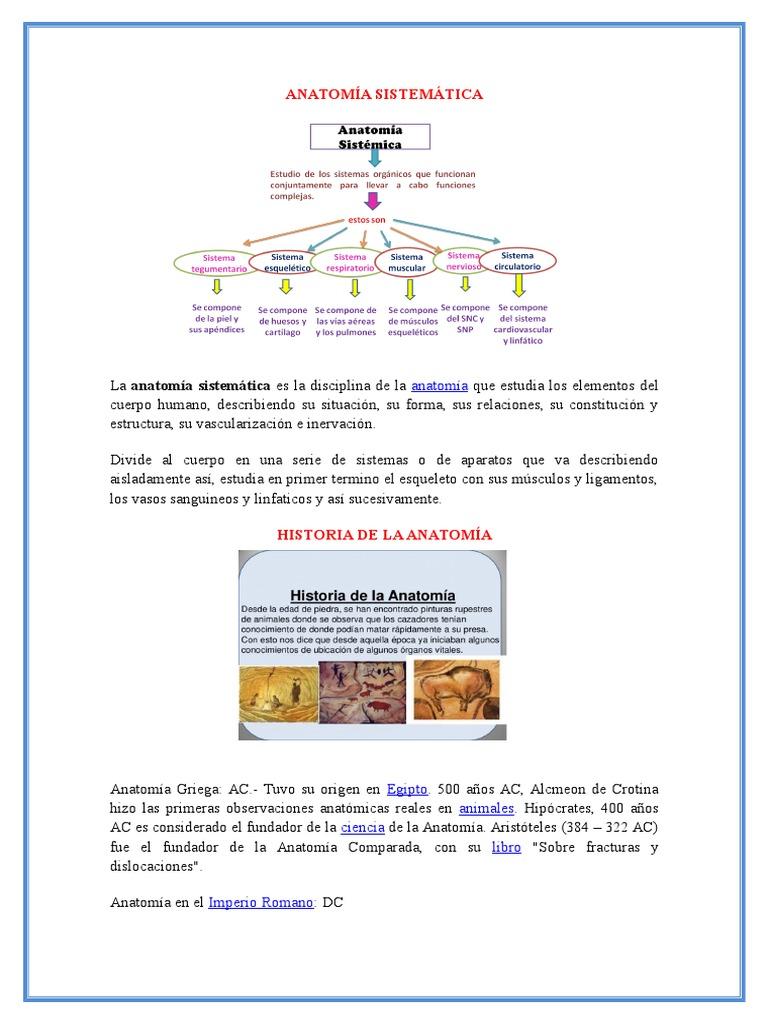 Asombroso Definir La Anatomía Sistémica Colección de Imágenes ...