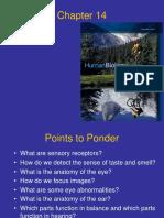 14 Mader - The Senses