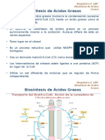Etapa II-Biosíntesis de Ácidos Grasos