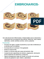 Anexos embrionales-fetales
