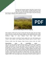 Mengenal Mangrove