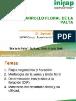 s Salazar Desarrollo Floral de La Palta