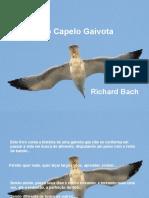 Fernão_Capelo_Gaivota