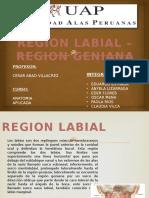 Region Labial y Geniana