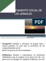 Comportamiento Social de Los Animales