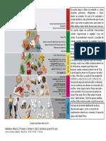 Pirâmide Alimentar Cirurgia Bariátrica (2)