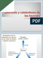 Glucolisis y Catabolismo de Hexosas (1)