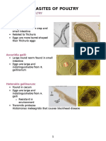 Parasites of Poultry