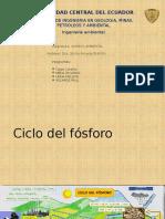 Ciclo del fósforo_Grupo 4.pptx