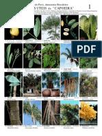 Estado Do Pará, Amazônia Brasileira Plantas Úteis Da Capoeira