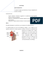 Trabajo 4 Anatomia