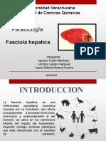 faciola_hepatica..pptx