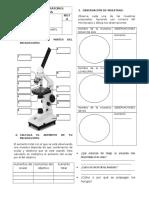 Práctica de Laboratorio Observación de Muestras Al Microscopio