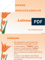Laleaua_V