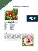 Mac Floare.doc