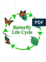 Worksheet Butterfly Life Circle
