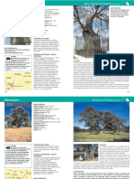 Botanica - Arboricultura - Guia del Viajero - Arboles leyendas vivas - Extremadura (Caja Madrid).pdf