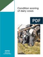 BCS-Dairy-cattle.pdf