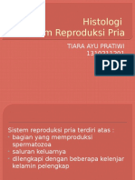 Histologi Sistem Reproduksi Pria