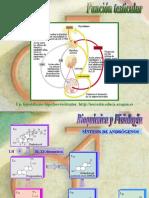 Patologia Testicular1