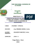 Identificación de Los Principales Clones de Plátano y Banano en El Fundo 01 de La Facultad de Agronomia
