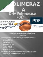ADN Polimeraza