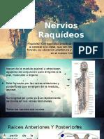 Nervios Raquídeos(1)
