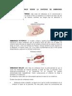 Tipos de Embarazo Según La Cantidad de Embriones Fecundados