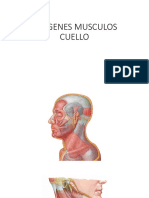 IMÁGENES MUSCULOS CUELLO2