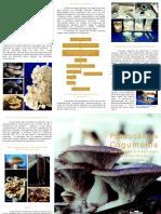 fold2005-09_producaoCogumelos