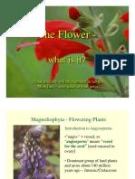 401_05Flowers.pdf