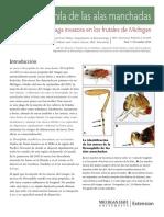 La Drosophila de Las Alas Manchadas