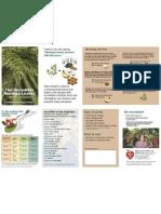 Moringa Brochure