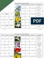 Diagrammes Et Formules Florales - Copie