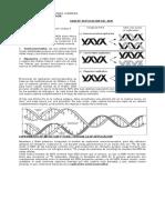 Replicacion ADN 2011