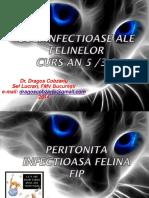 213078047-Curs-An5-Pisici-Peritonita-Infectioasa-Felina.pdf