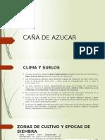 CAÑA DE AZUCAR.pptx