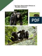 Chimpanzee Possible Sentences